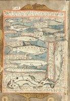 Adriaen Coenen: aus seinem »Visboek« (»Fischbuch«) (1546)
