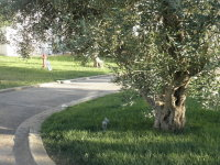 Iberotel Apulia in Ugento